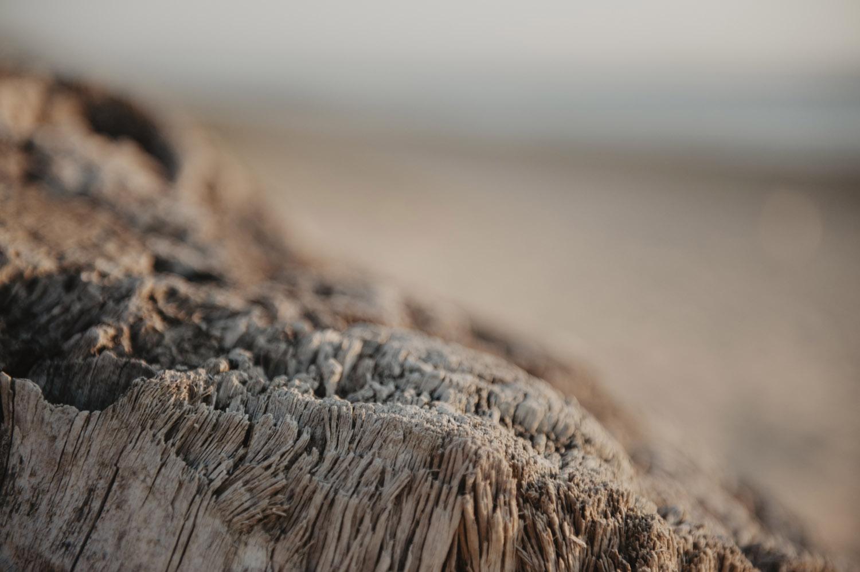 détail bois sur la plage