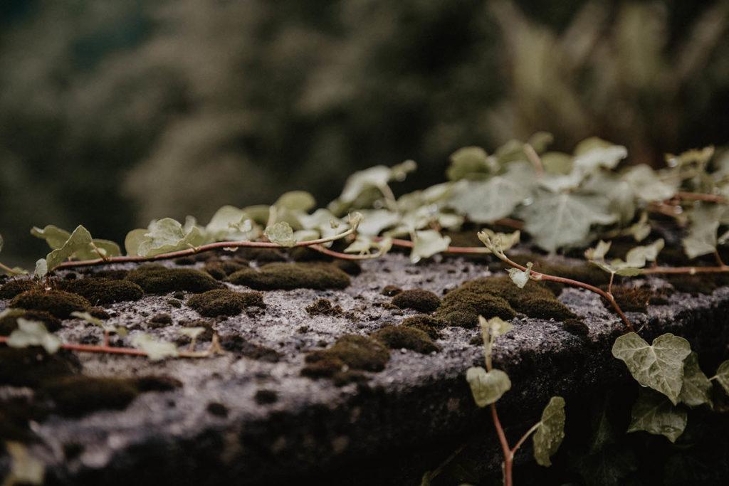 Détail de la végétation au Domaine de Lucain, salle de mariage près de äu, 64